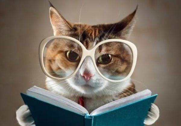 Картина по номерам 30х40 «Умный котик»
